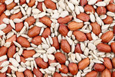 Close ip of peanuts and sunflower seeds. — Stock Photo