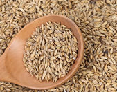 Closeup of wheat grains with wood spoon. — Stock Photo