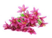 Close up van bloemboeket. — Stockfoto