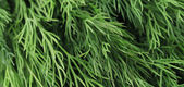 Texture of fresh dill herb close up. — Stock Photo
