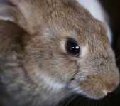 Young rabbit — Foto de Stock