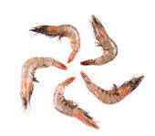 Raw shrimps — Foto Stock