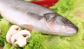 Seabass with lettuce — Stock Photo