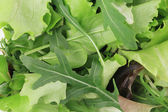 Green and Red Leaf Lettuce. — Stock Photo
