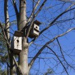 Birdhouses await their owners. — Stock Photo