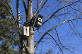 Birdhouses await their owners. — Stock Photo
