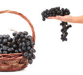 Dark grapes in a wicker basket. — Stock Photo