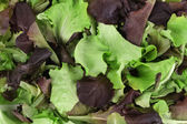 Green and red leaf of lettuce close up. — Stock Photo