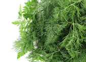 Texture of fresh herb close up. — Stock Photo
