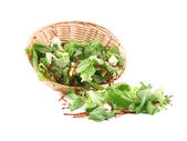 Lettuce leaves and beet in basket. — Stock Photo
