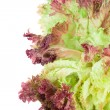 Red lettuce isolated on white. — Stock Photo #47830441