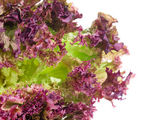 Red lettuce isolated on white. — Stock Photo