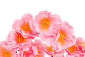 Pink flowers. — Stock Photo