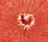 Grapefruit slice closeup — Stock Photo