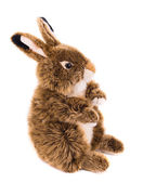 Cute easter rabbit. — Stock Photo