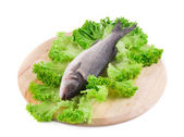 Seabass on lettuce. — Stock Photo