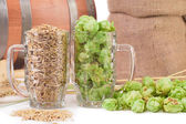 Barley and hop — Stock Photo