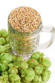 Mug with barley and hop — Stock Photo