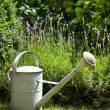 Watering-can in the garden — Stock Photo