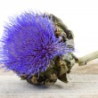 Stock Photo: Beautiful artichoke flower