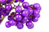 Macro of beautyberry bush — Stock Photo
