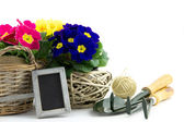 Garden utensils with primroses and small blackboard — Stockfoto