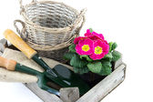 Crate with baskets, primrose and garden utensils — Стоковое фото