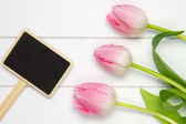 Top view of three soft pink tulips — Stock Photo