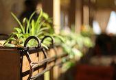 Houseplants in a wooden flower bed. shallow depth of field — ストック写真