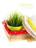 Garden equipment with plant and green plants isolated on white — Foto de Stock