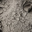 Dry earth texture — Stock Photo #26474101