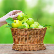 Apples in a basket on wooden table against garden background — Stok fotoğraf