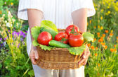 Woman hands holding a basket full of vegetables in the garden — Stock Photo