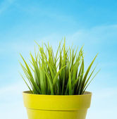 Green grass in a yellow flower pot on blue background — Stock Photo