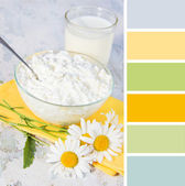 Cheese and chamomile, breakfast . colour palette swatches. — Stock Photo