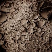 Dry earth texture — Stock Photo