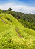 Beautiful landscape of tropical island — Stock Photo