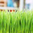 Green grass. Shallow depth of field — Stock Photo #49630627