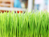 Green grass. Shallow depth of field — Stok fotoğraf