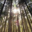 Sunrays in the woods — Stock Photo
