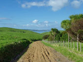 Muddy road on Motutapu Island — Stock Photo