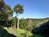 Hiking track trough native bushland — Photo