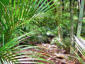 Native New Zealand bushland — Photo