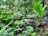 Native New Zealand bushland — Photo