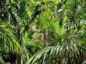 Native bushland vegetation — Photo