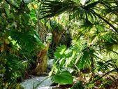 Native bushland in a park — Stockfoto