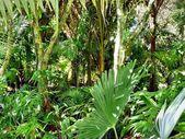 Native bushland in a park — Photo