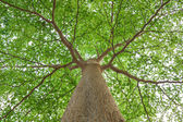 Under the tree — Stock Photo