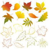 Falling leaves set — Stock Vector