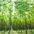 Driving by the green forest in motion blur — Foto de Stock